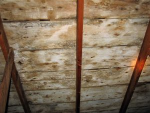 Brown mold in attic under roof
