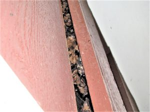Bat house siding with bats