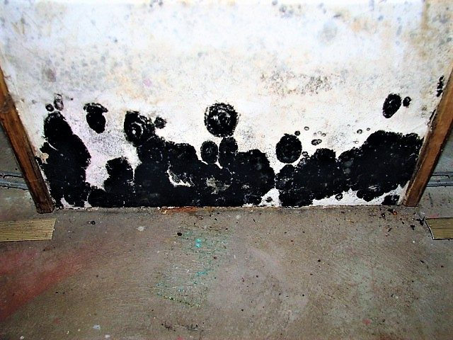 Black mold growing on a wall in a home