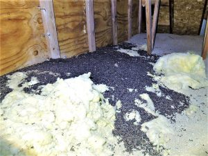 bat guano on insulation