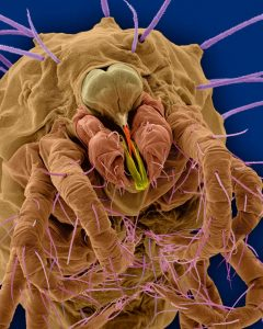 close up photo of a colorful dust mite